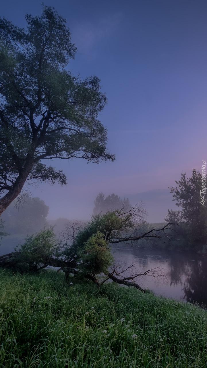 Drzewa nad rzeką Istra