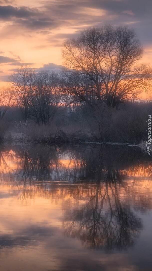 Drzewa nad rzeką o wschodzie słońca