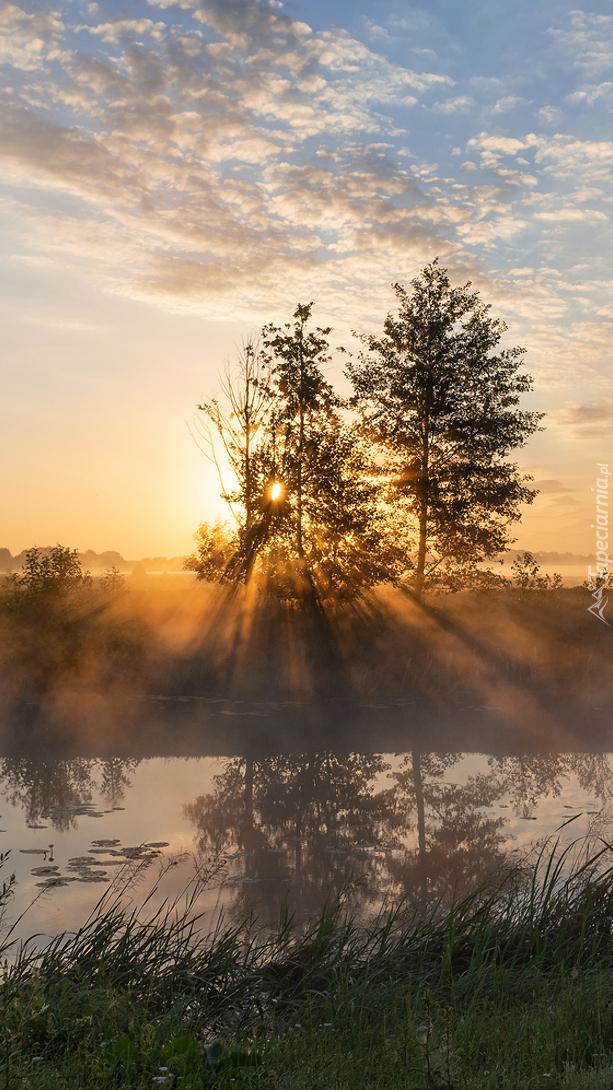 Drzewa nad zamgloną rzeką