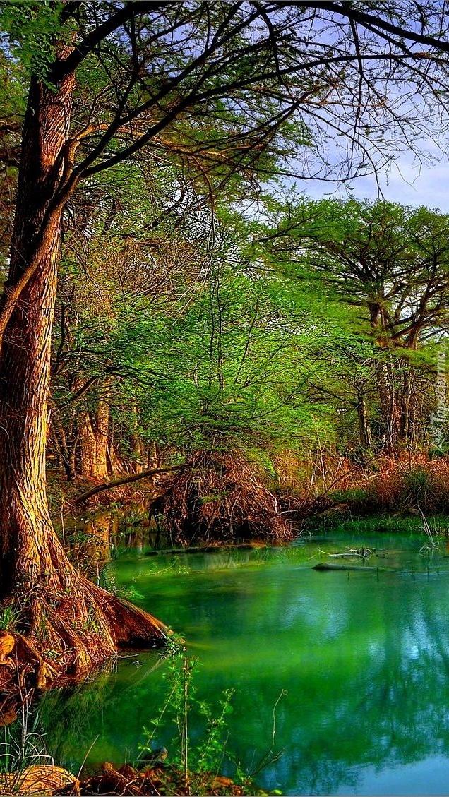 Drzewa nad zieloną wodą