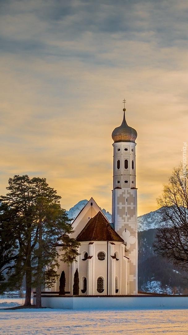 Drzewa obok kościoła Eglise Saint Coloman w Bawarii