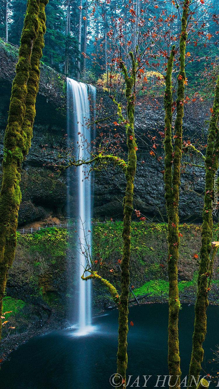Drzewa obok wodospadu na skale