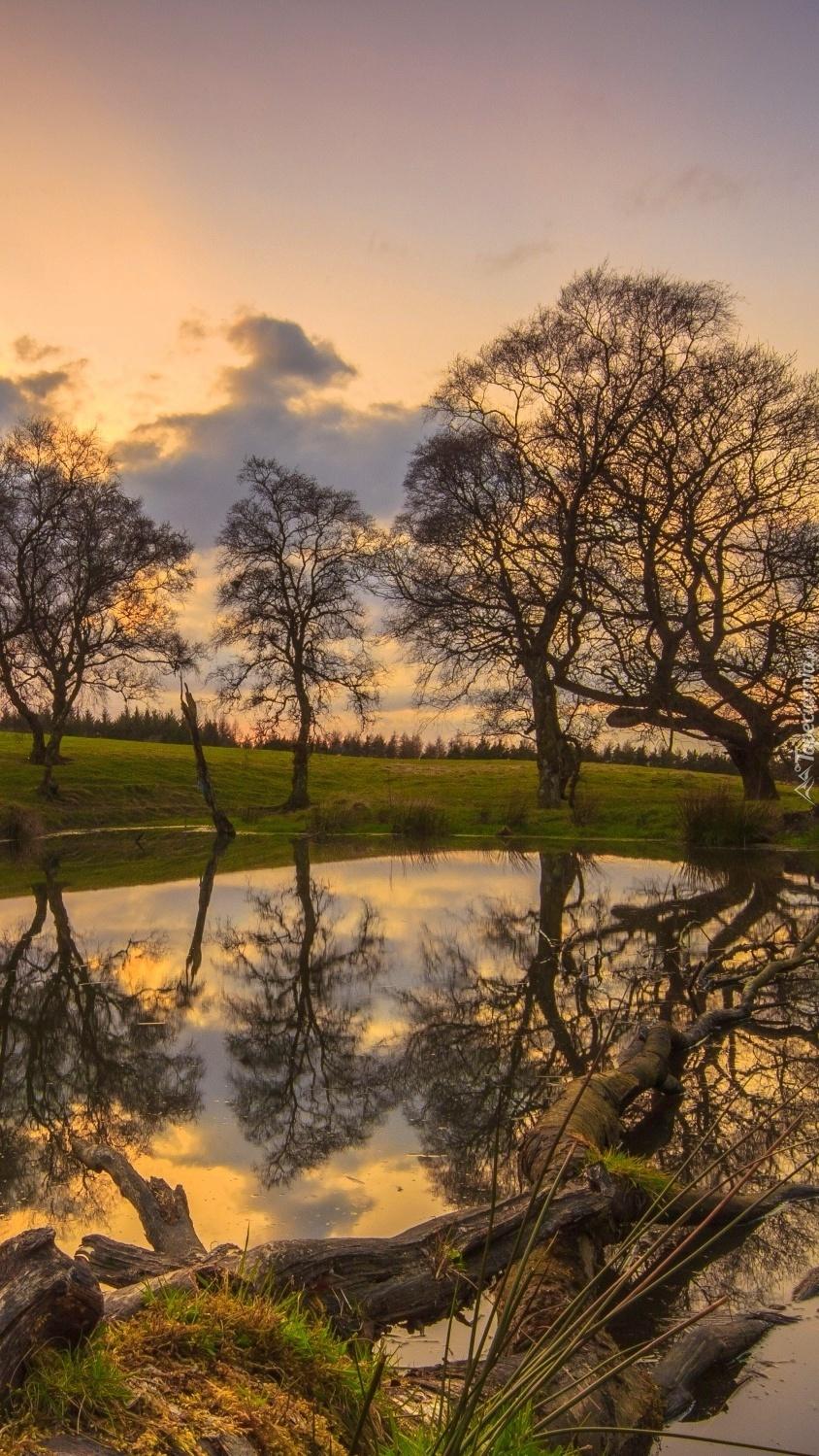 Drzewa odbite w stawie o zachodzie słońca