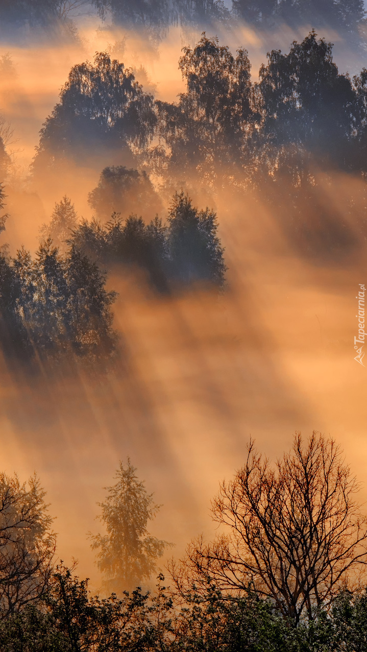 Drzewa otulone mgłą