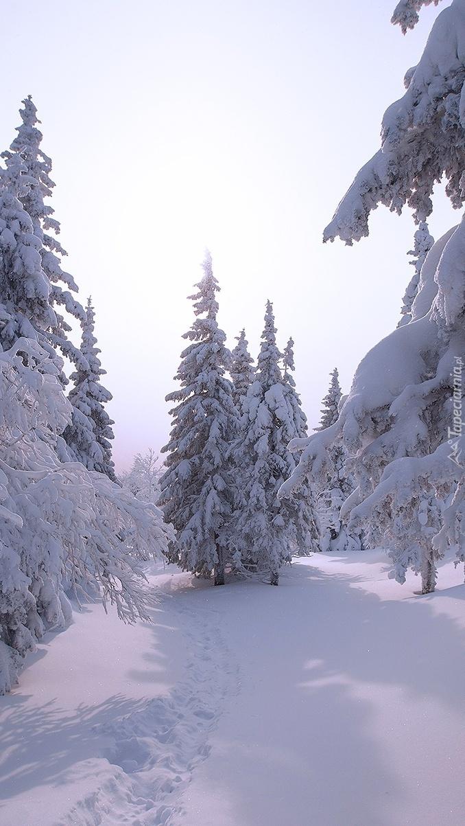 Drzewa pod zimową czapą