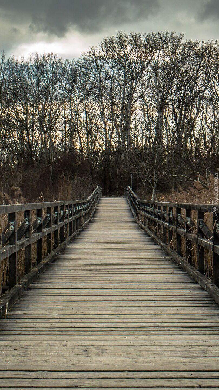 Drzewa przy drewnianym moście