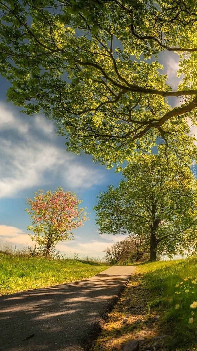 Drzewa przy drodze w słońcu