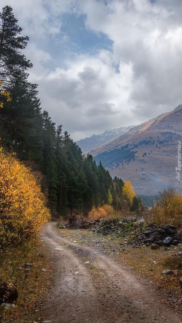 Drzewa przy górskiej drodze