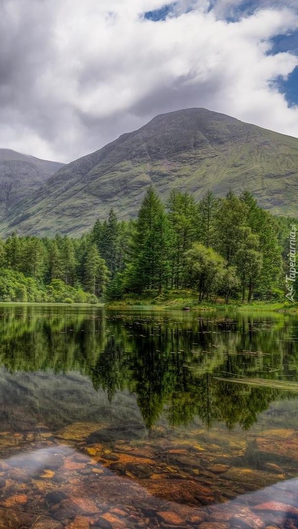 Drzewa przy górskim jeziorze