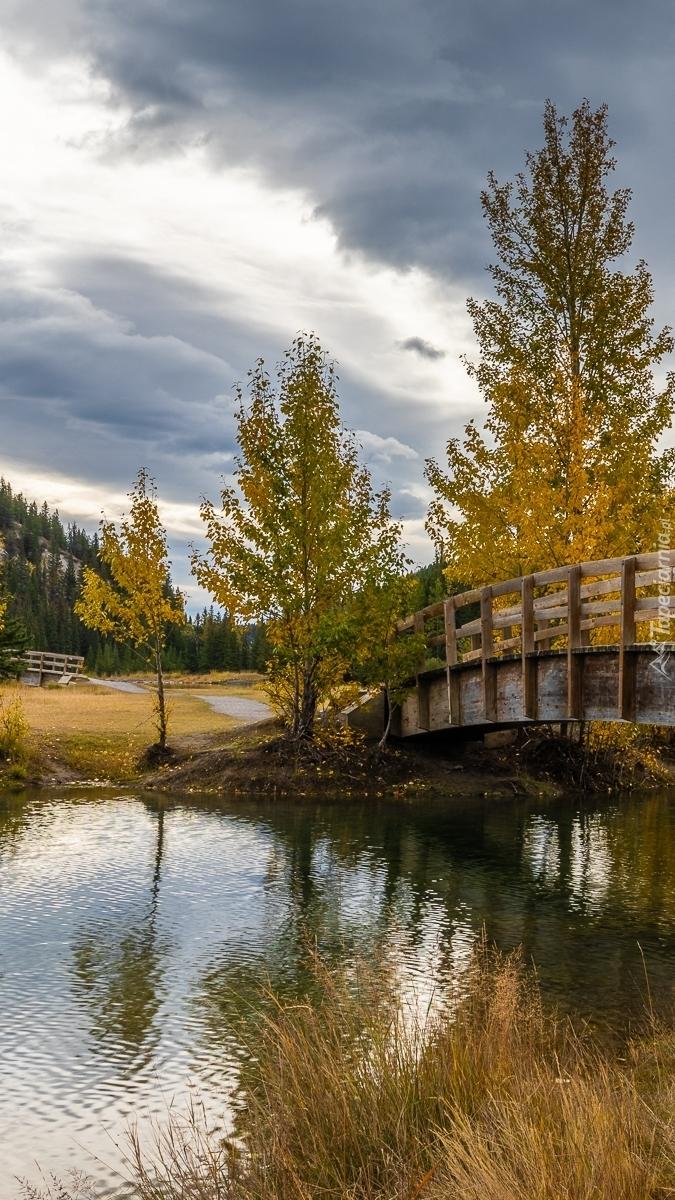 Drzewa przy moście nad rzeką