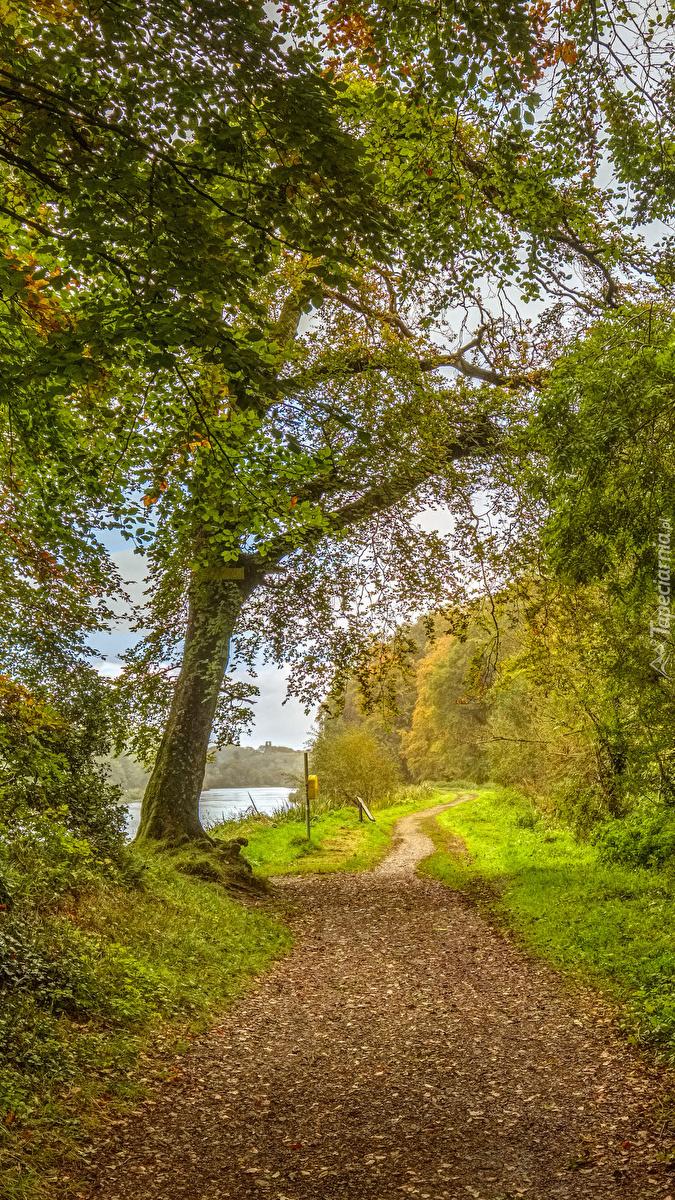 Drzewa przy ścieżce