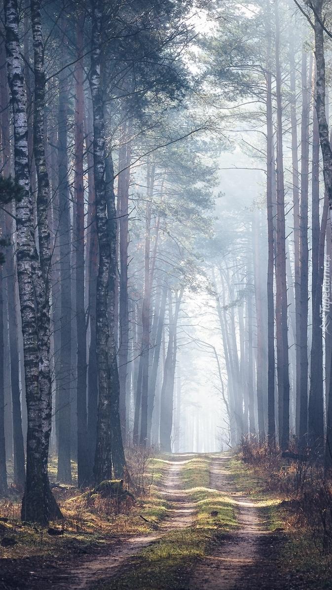 Drzewa przy ścieżce w zamglonym lesie