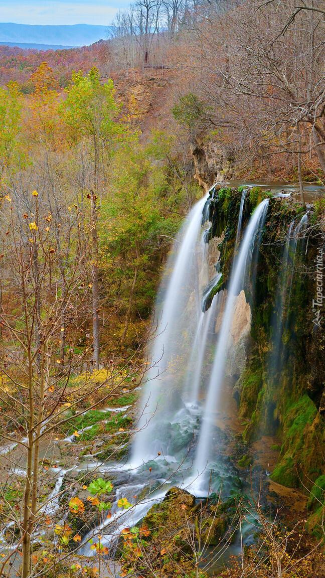 Drzewa przy wodospadzie Falling Spring Fall