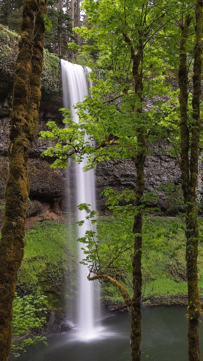 Drzewa przy wodospadzie South Falls