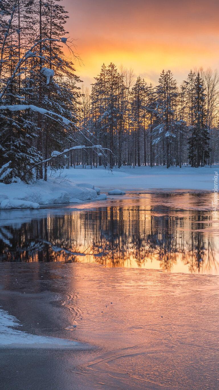 Drzewa przy zamarzającej rzece