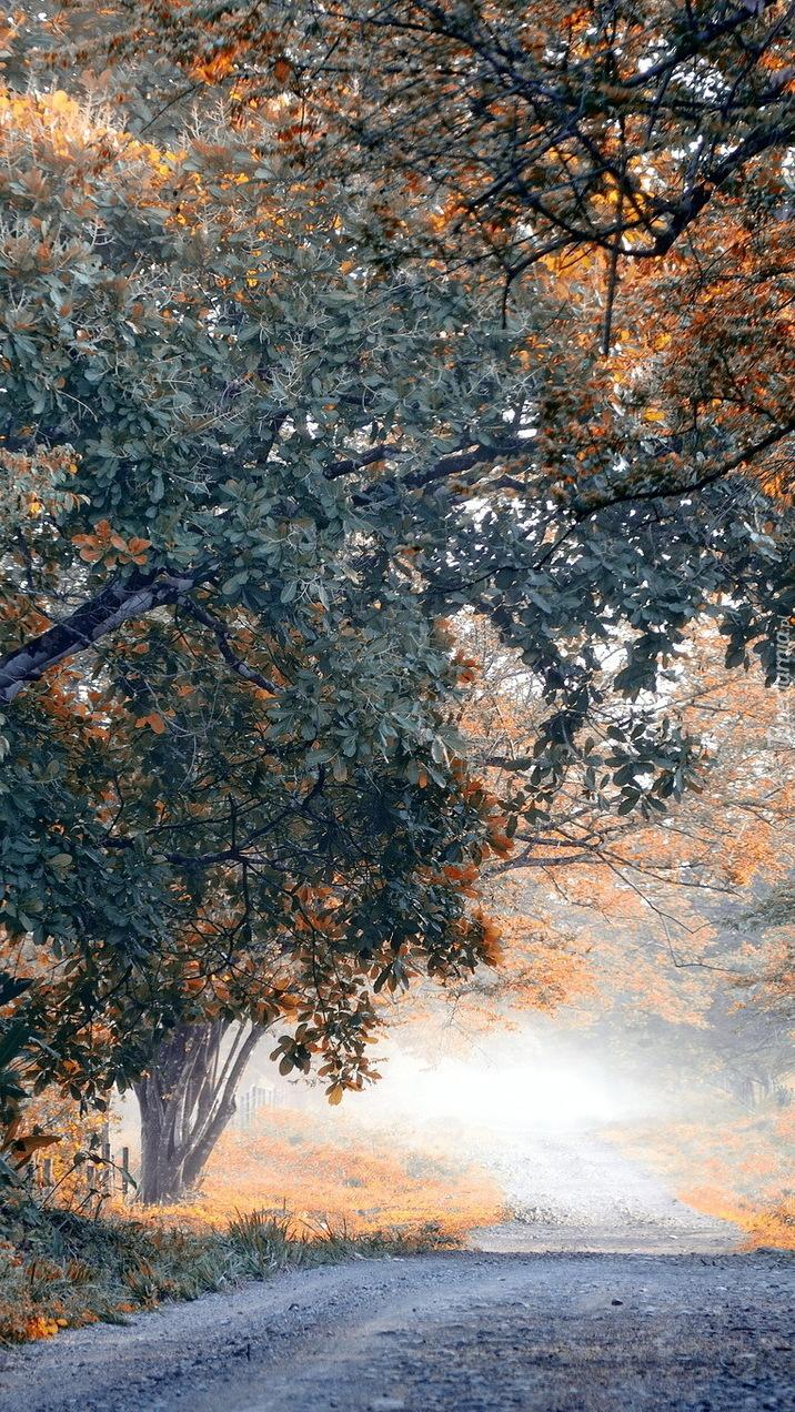 Drzewa przy zamglonej drodze