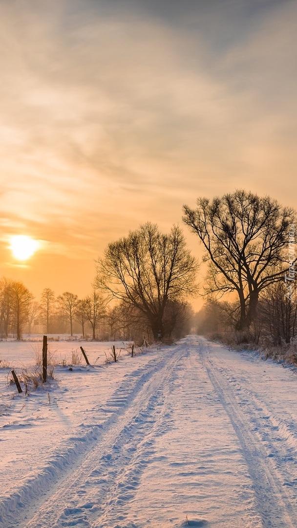 Drzewa przy zaśnieżonej drodze