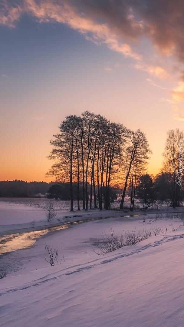Drzewa przy zaśnieżonej rzece