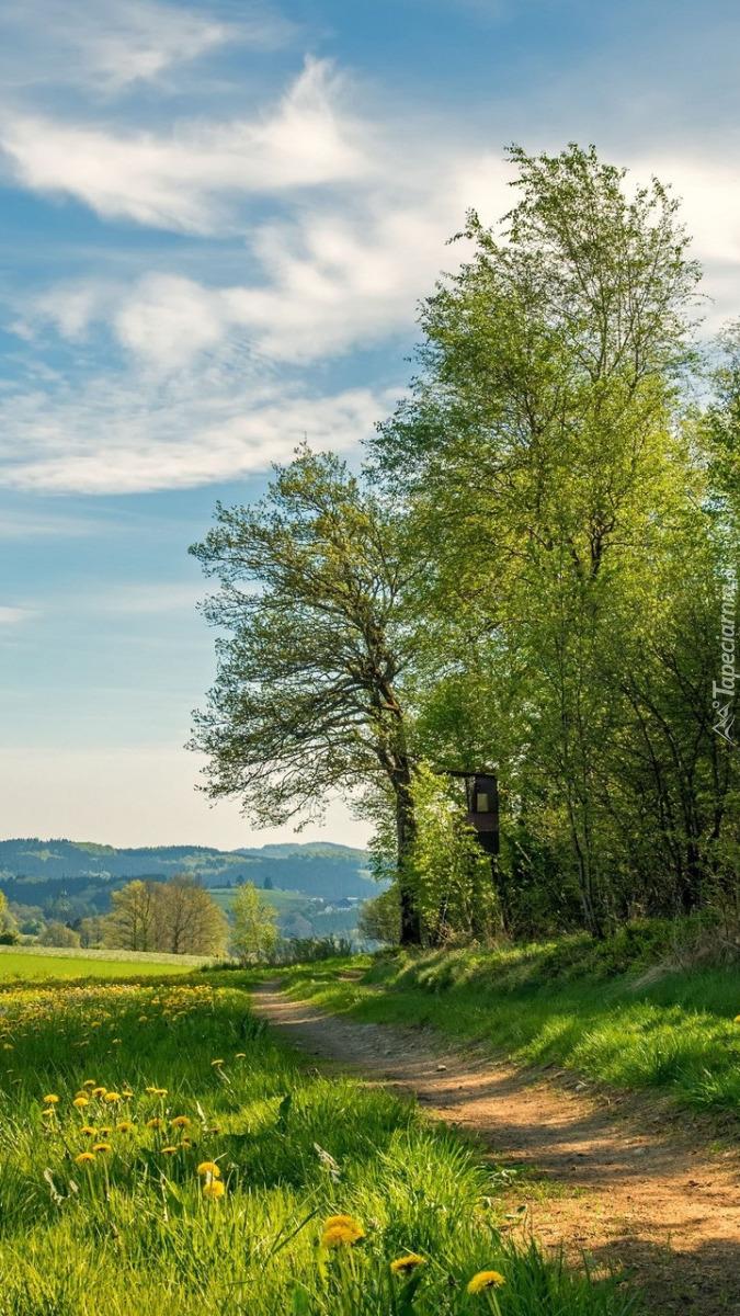 Drzewa rosnące przy drodze polnej