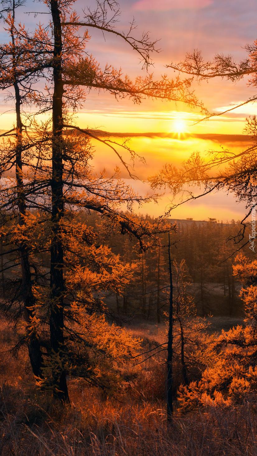 Drzewa rozświetlone słońcem