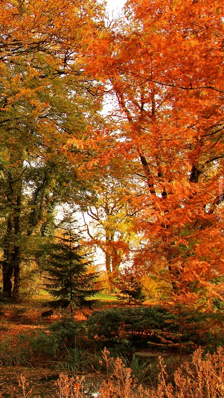 Drzewa w barwach jesieni