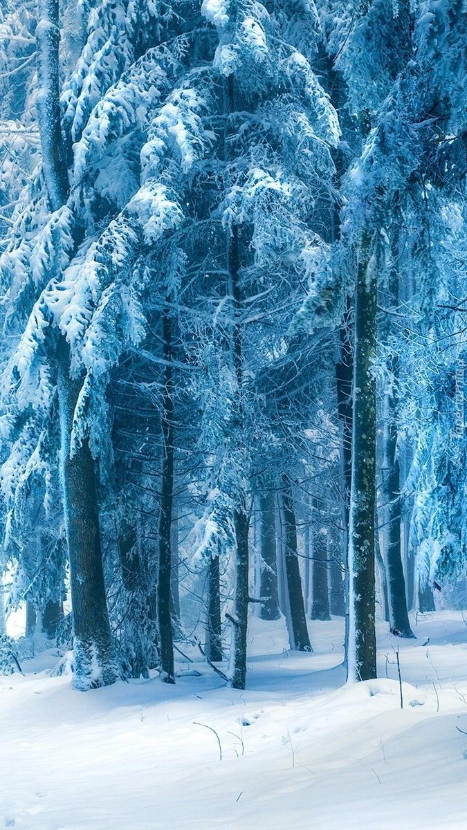 Drzewa w bieli