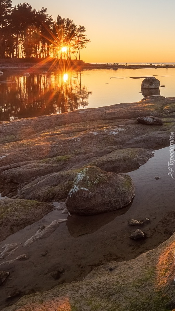 Drzewa w blasku słońca na brzegu morza