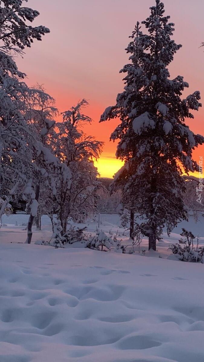 Drzewa w blasku zachodzącego słońca