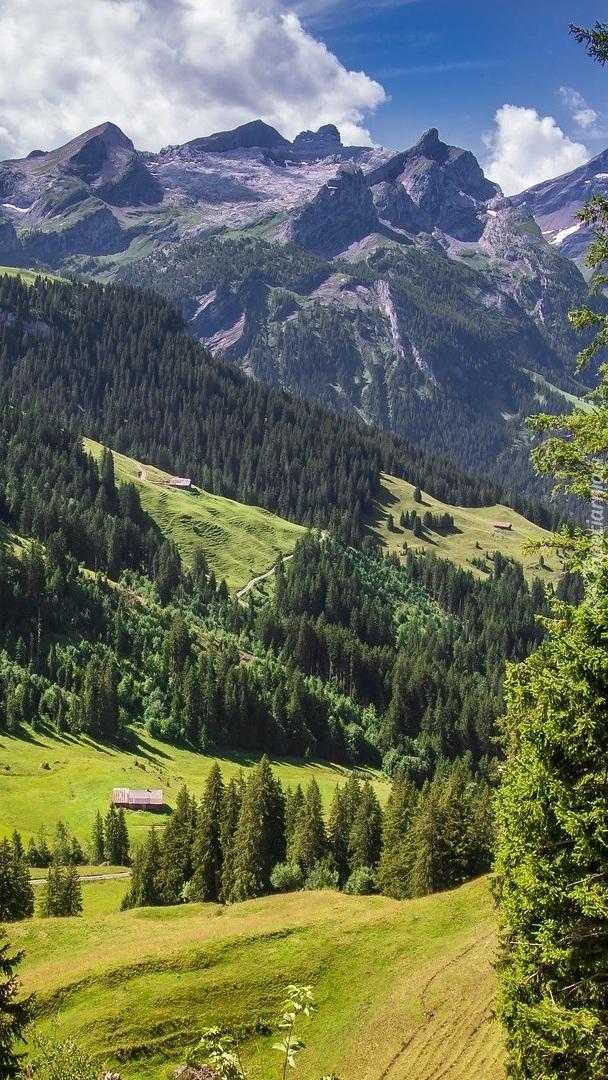 Drzewa w dolinie na tle gór
