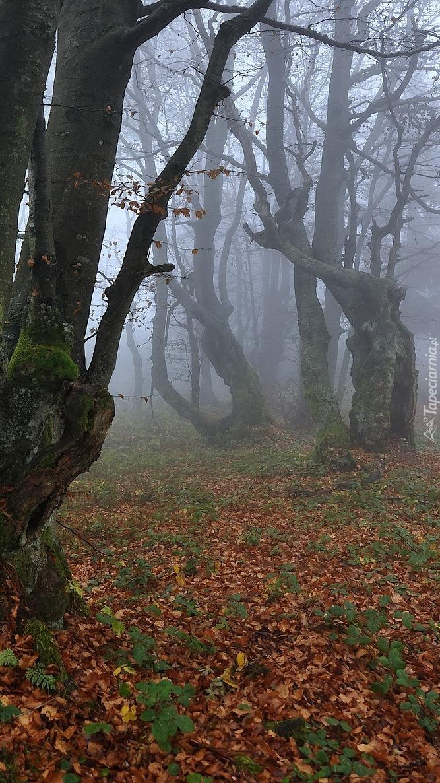 Drzewa w jesiennej mgle