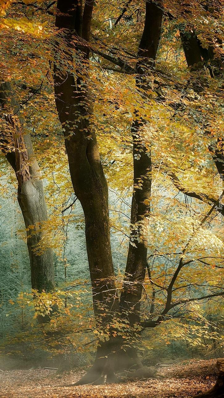 Drzewa w lesie jesienią