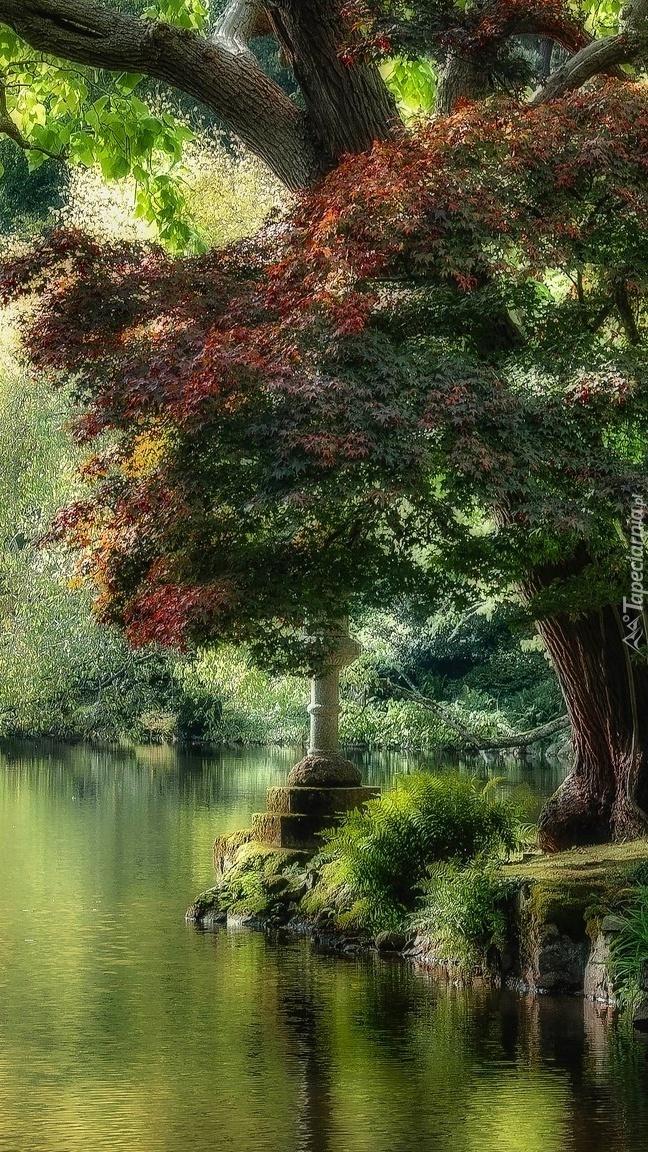 Drzewa w parku nad stawem