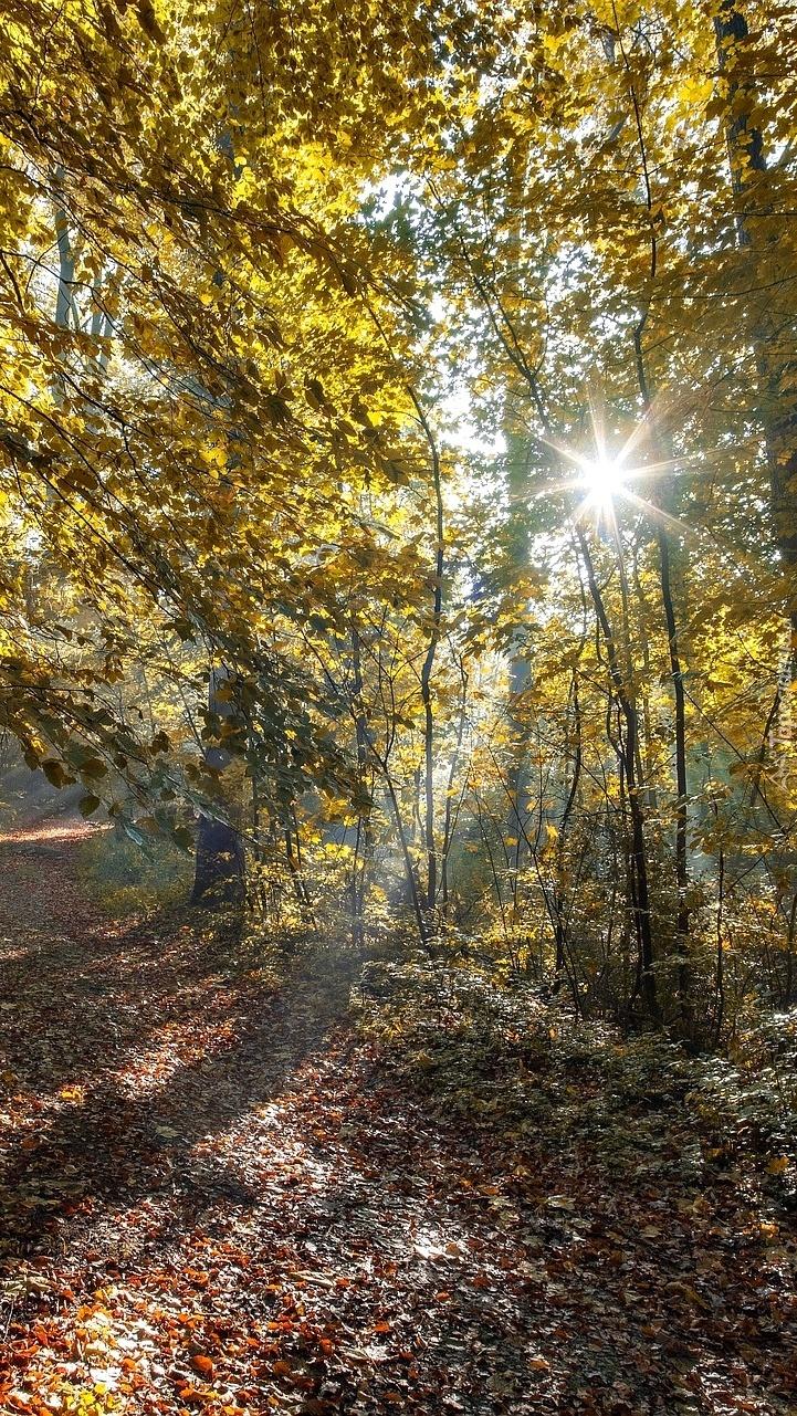 Drzewa w promieniach słońca