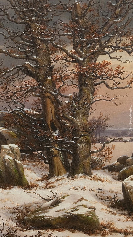 Drzewa w śniegu