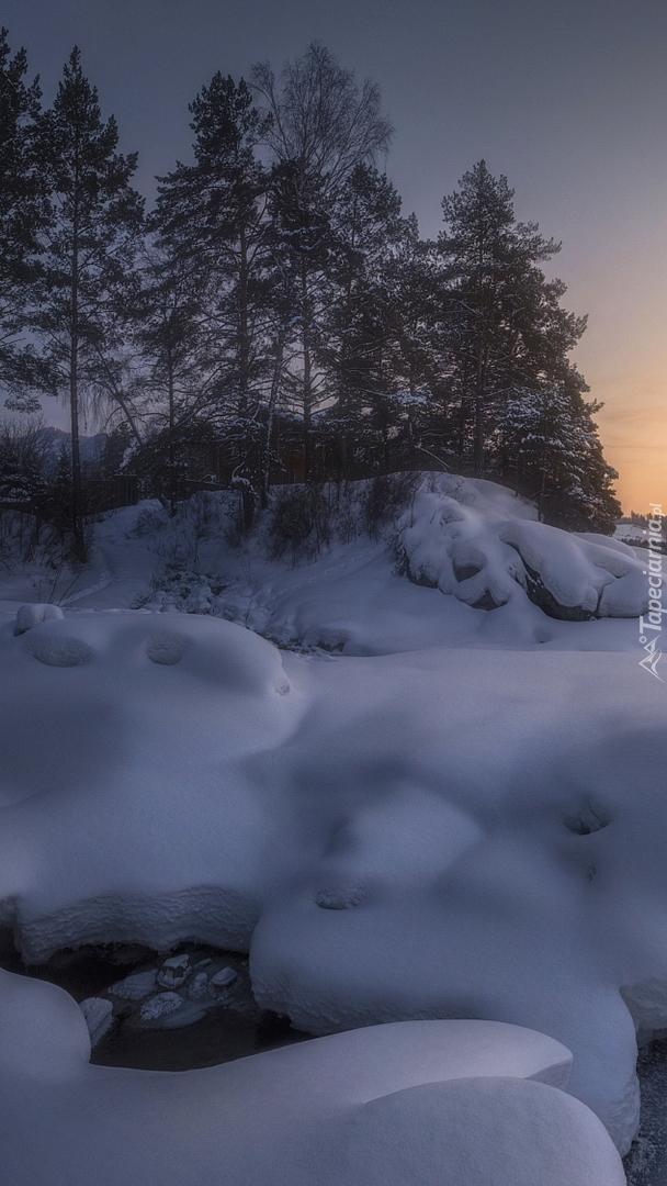 Drzewa w śniegu nad rzeką