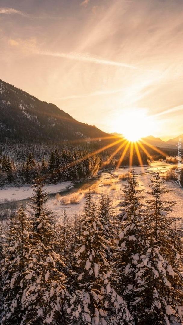 Drzewa w śniegu nad rzeką w górach