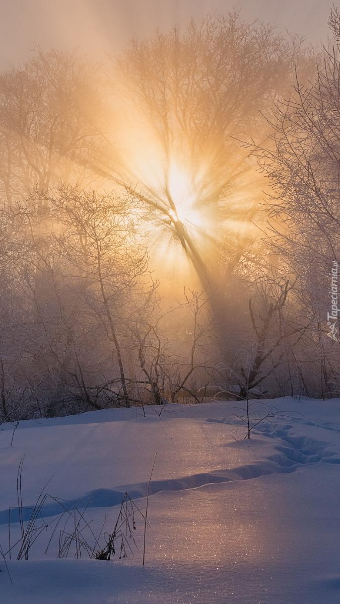 Drzewa w śniegu rozświetlone słońcem