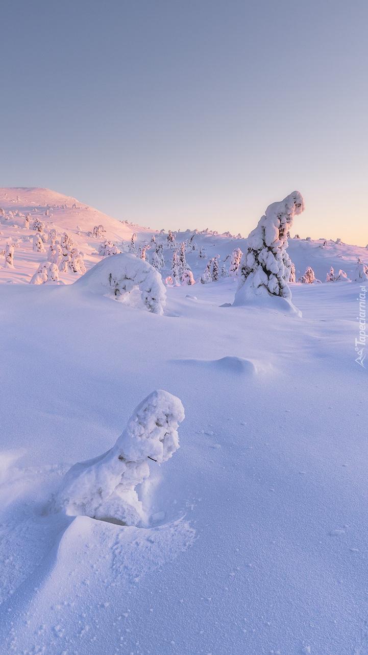 Drzewa w zaspach śnieżnych
