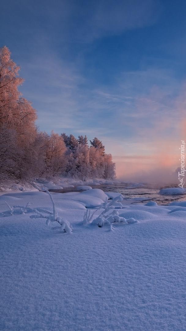 Drzewa w zimowym krajobrazie
