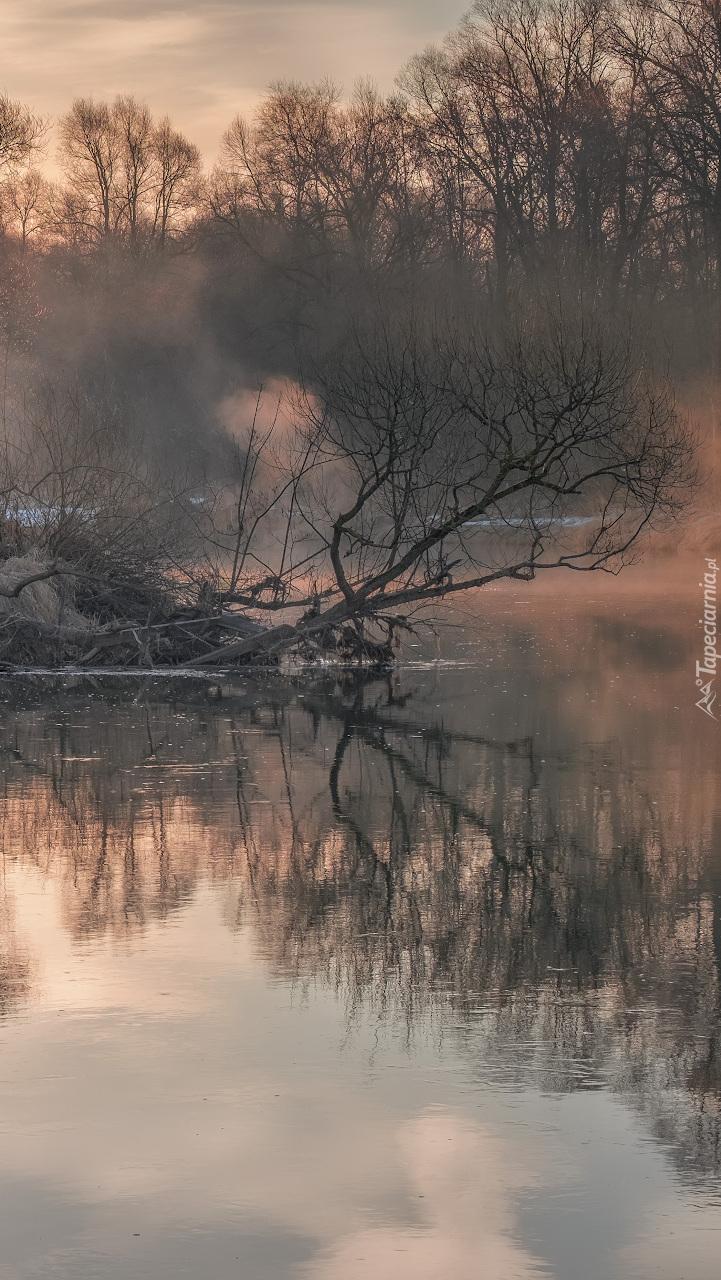 Drzewa we mgle nad rzeką Istra
