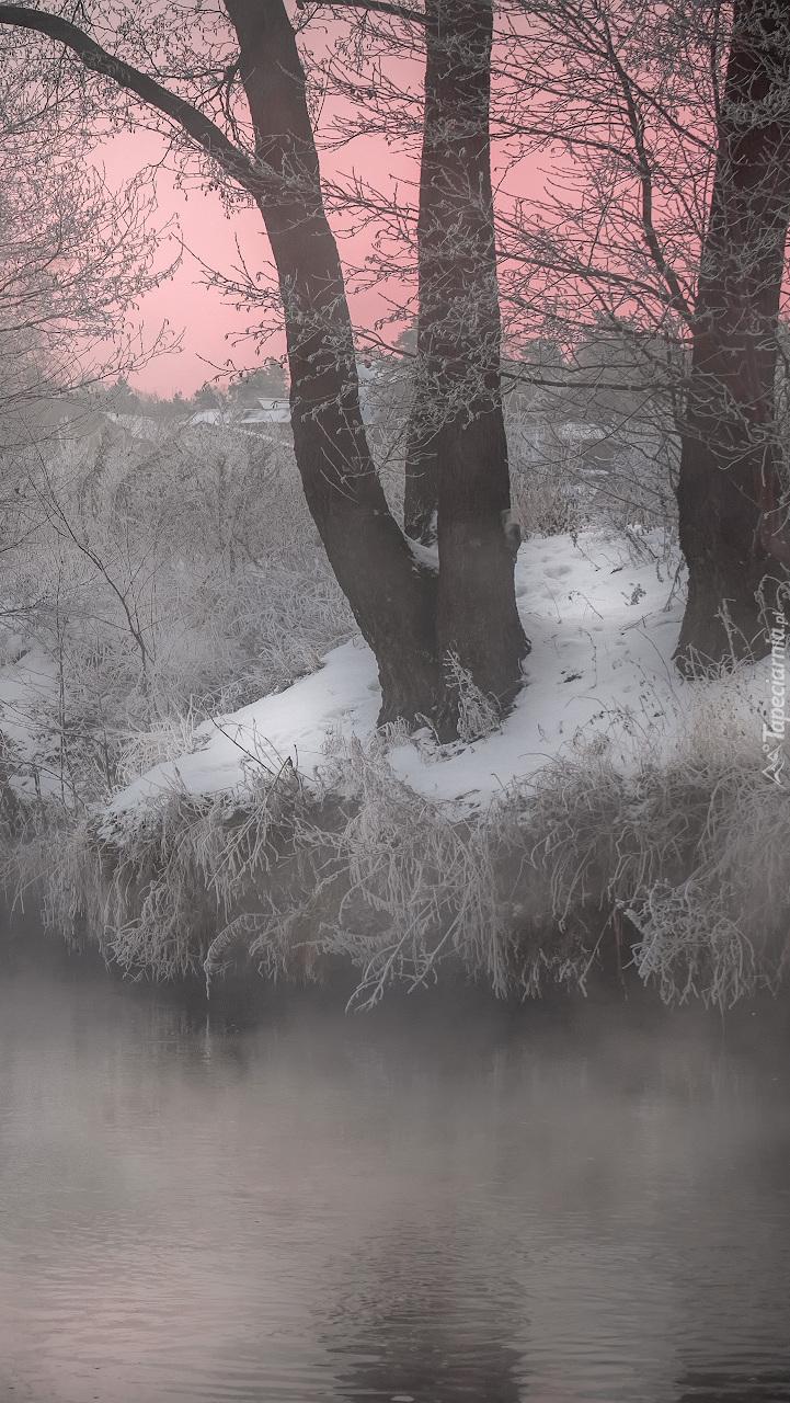 Drzewa we mgle nad rzeką