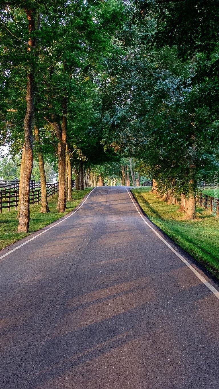 Drzewa wzdłuż drogi