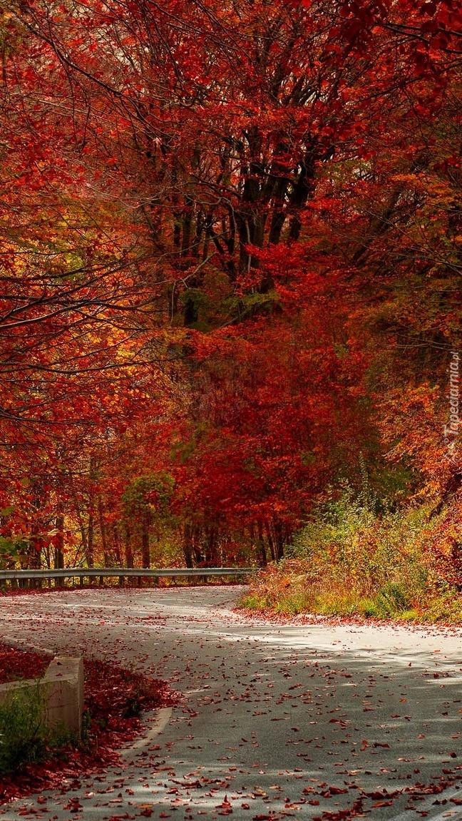 Drzewa z czerwonymi liśćmi przy drodze