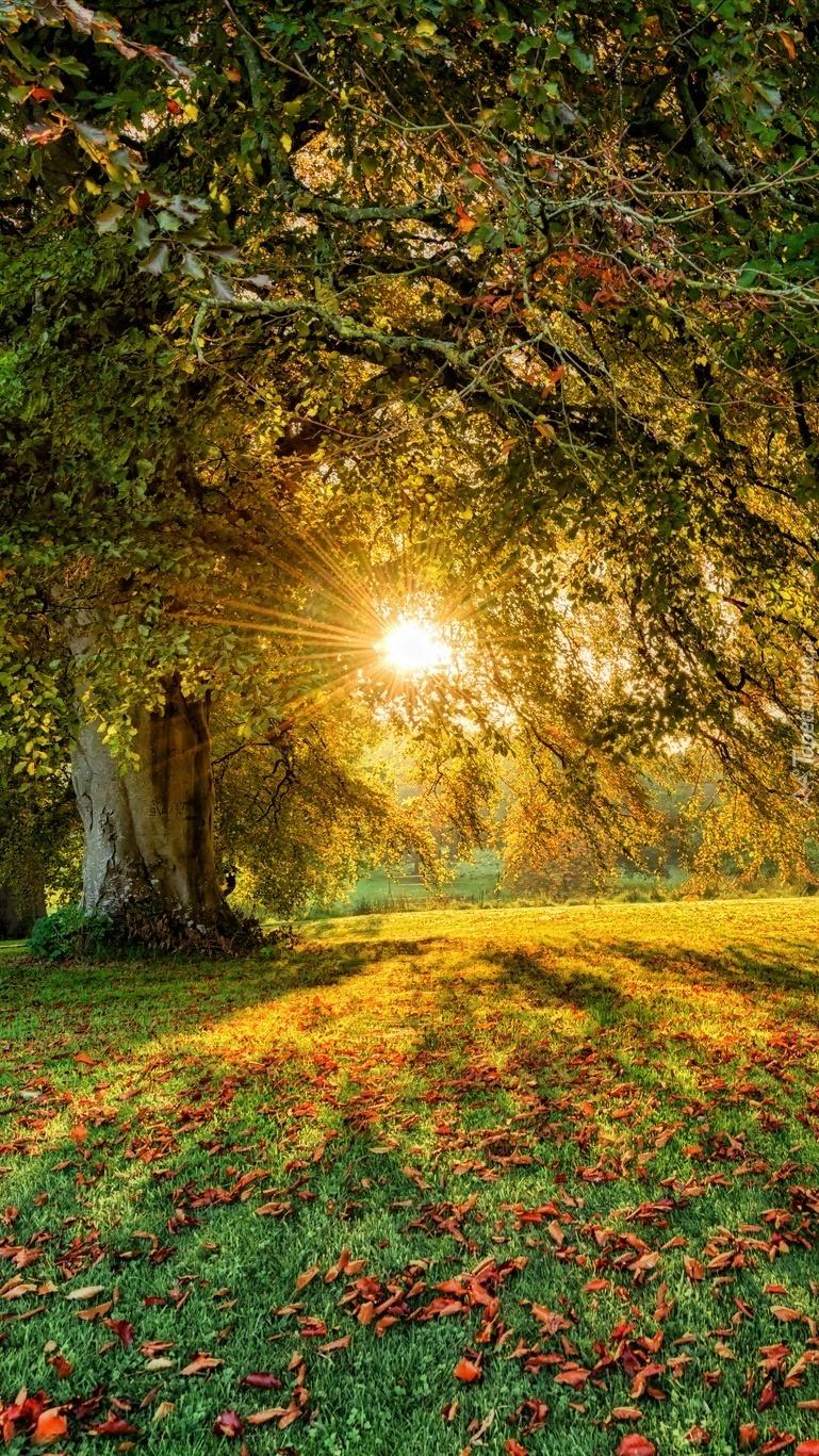 Drzewa z jesiennymi liśćmi w promieniach słońca