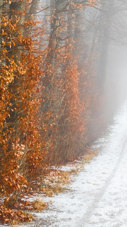 Drzewa z pożółkłymi liśćmi przy drodze