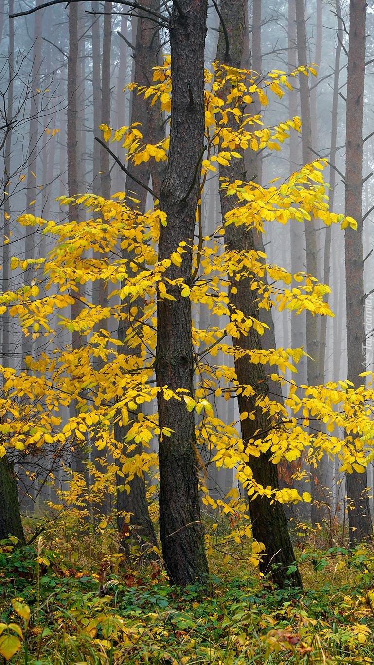 Drzewa z pożółkłymi liśćmi