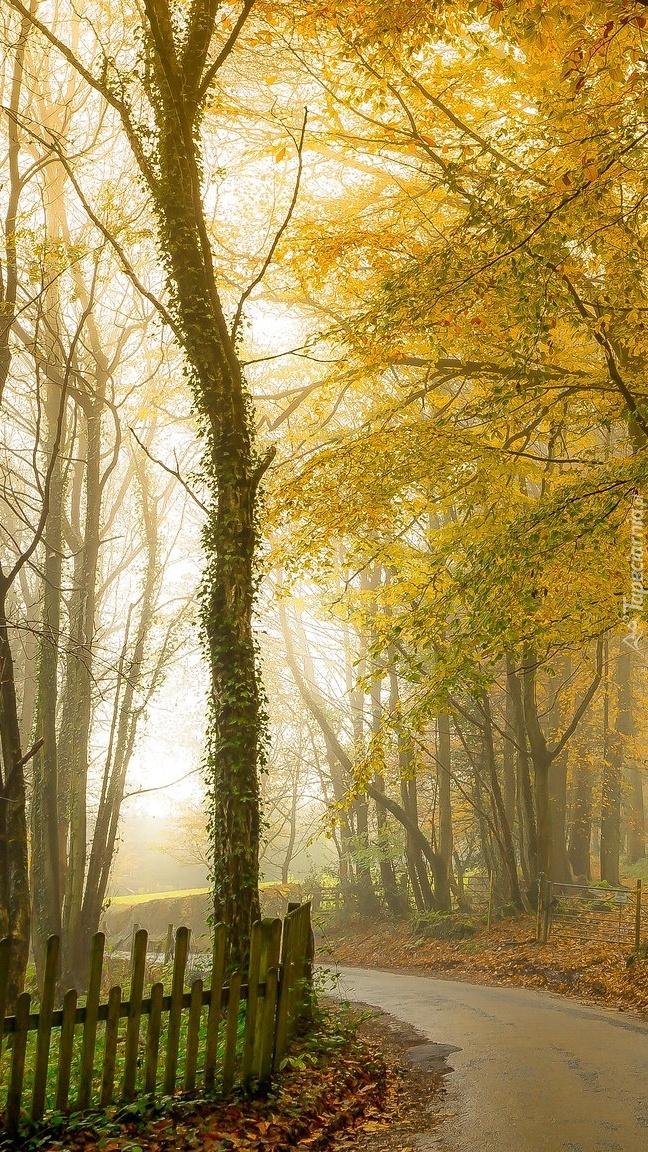 Drzewa za płotem przy drodze
