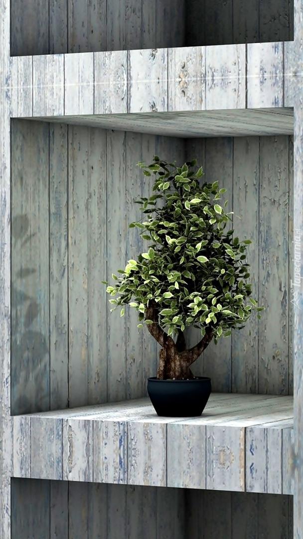 Drzewko bonsai na półce