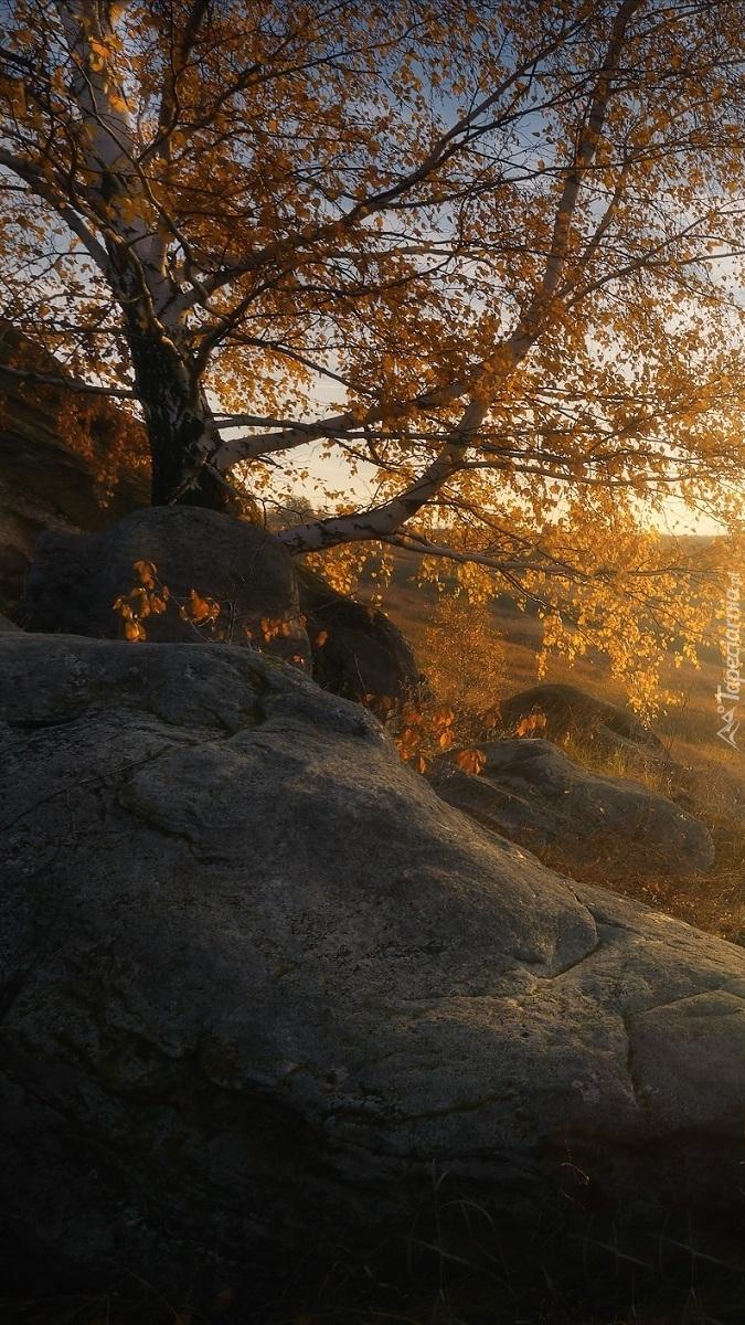 Drzewo i kamienie na wzgórzu