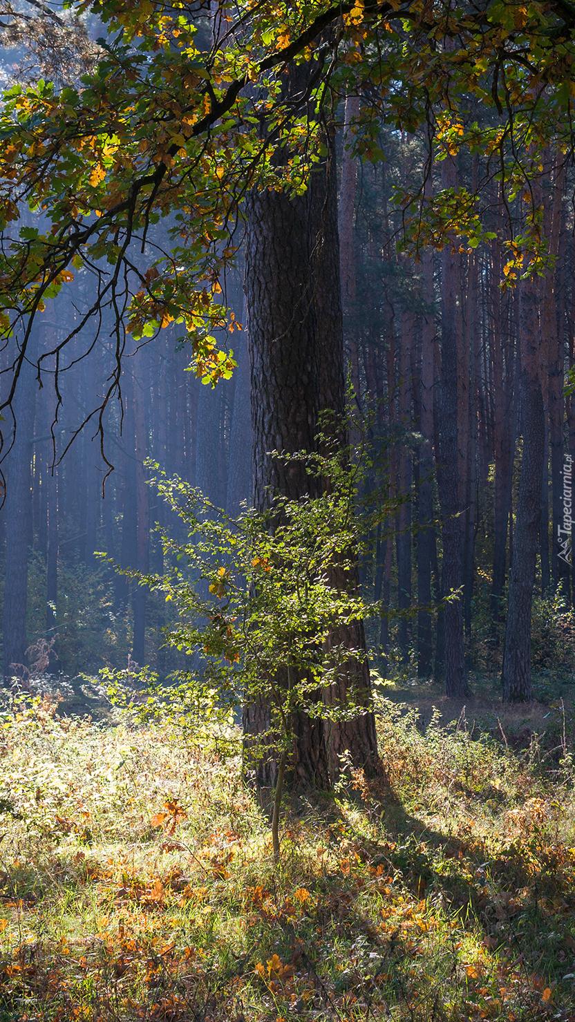 Drzewo i krzew w lesie